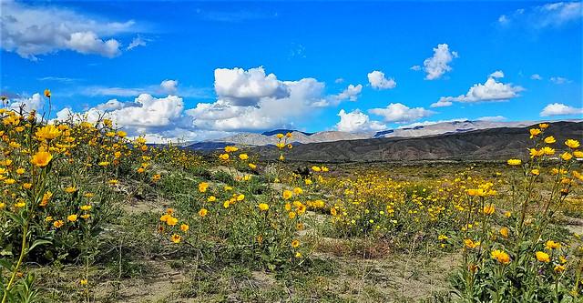 Desert Spring Panorama
