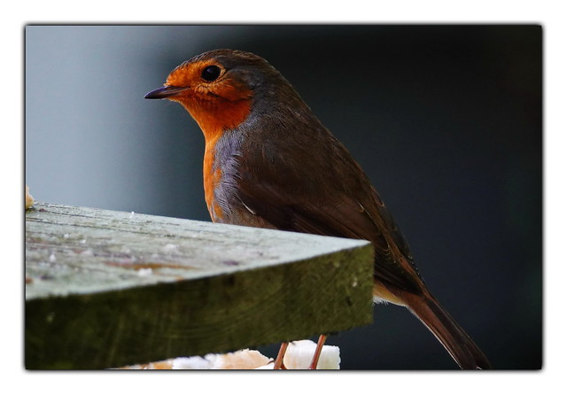 Robin gets ready for a meal