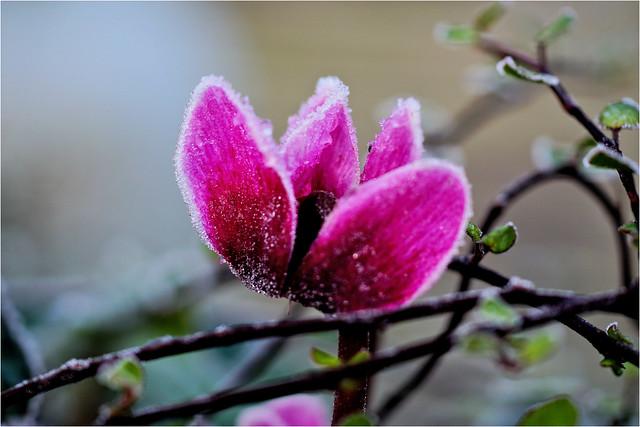 frozen.............
