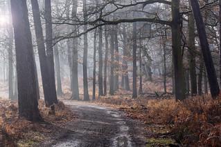 Former Pastoral Forest | Ehemaliger Hutewald
