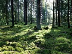Passeggiare nei boschi