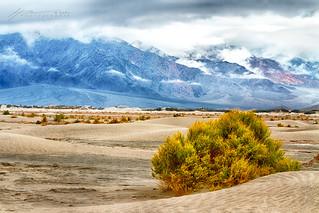Desert View...