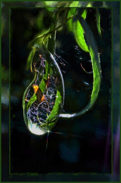 Nature's Tear Drop