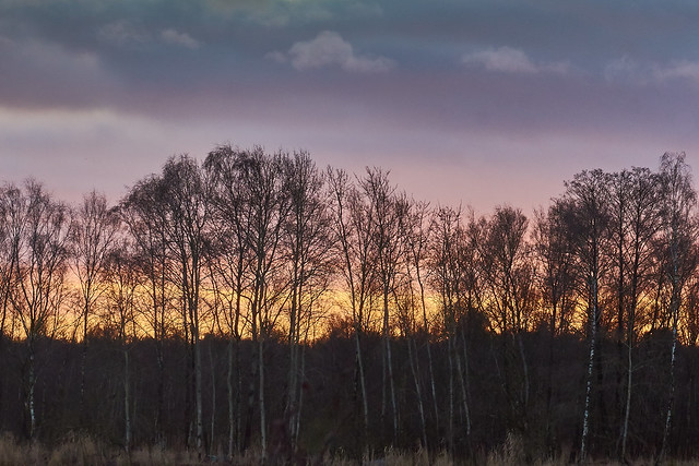 Sky over the birches