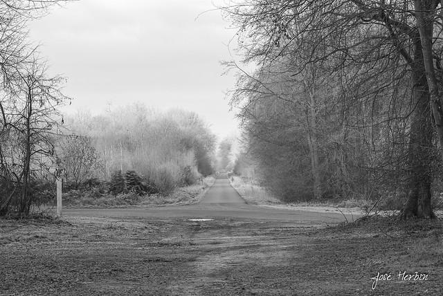 La forêt domaniale de Compiègne sous le givre