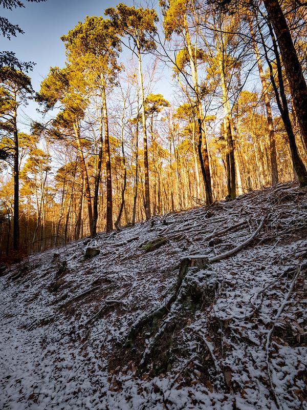 La forêt entre ombre et lumière... 50831272513_8b4cab9f6b_c