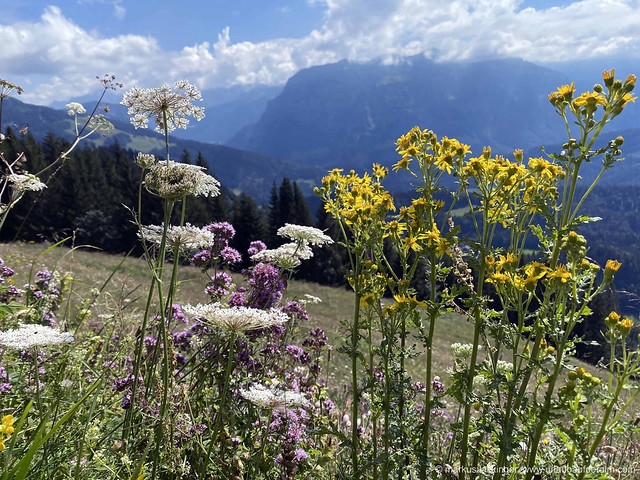 Almwandern in Bezau / Bregenzerwald - Vorarlberg