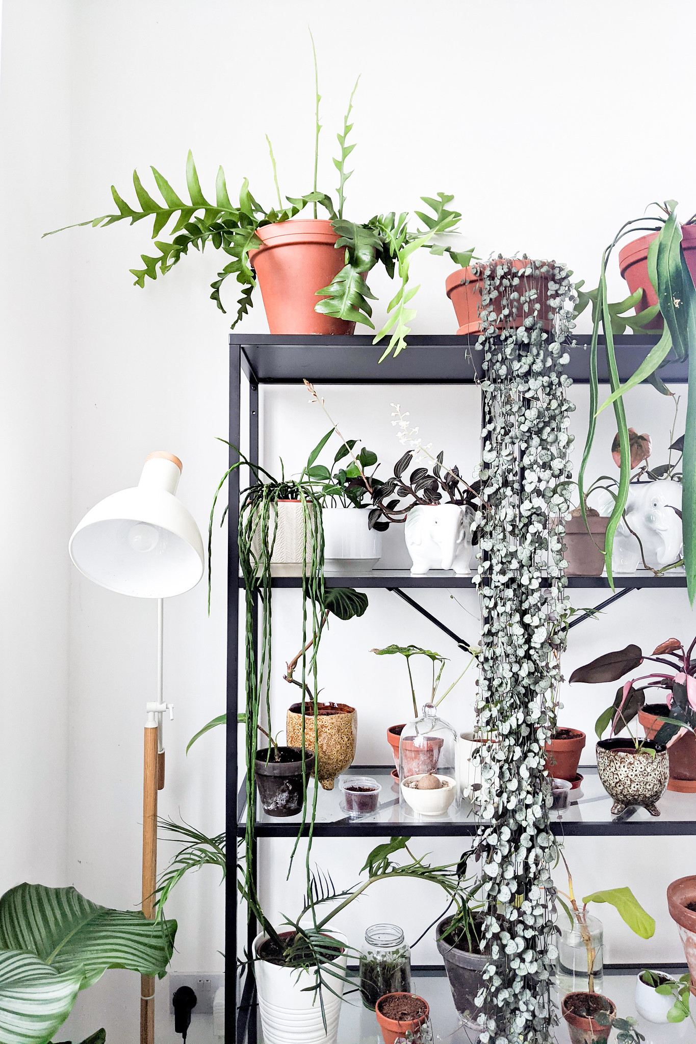 Sustainable House Plant Care