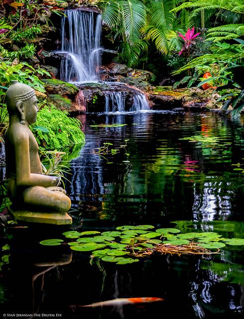 Waterfall, Lily Pads, Buddha and Koi