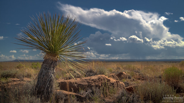 31 August 2020 — Twin Arrows, Arizona — Yucca and Monsoon Storm
