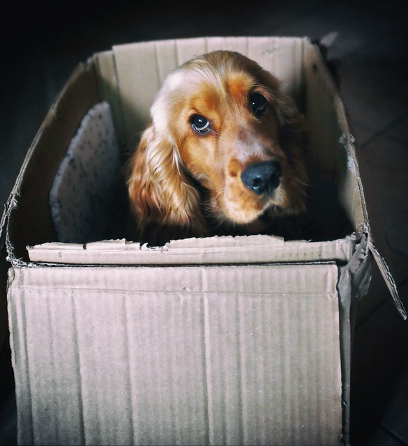 in the box...