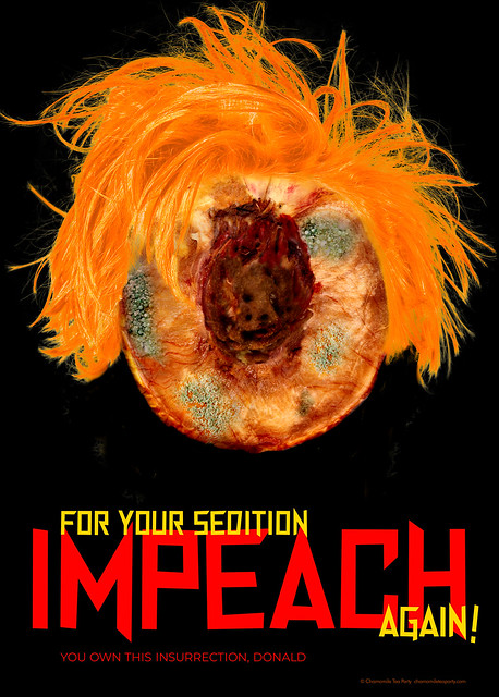 You Own This Insurrection, Donald