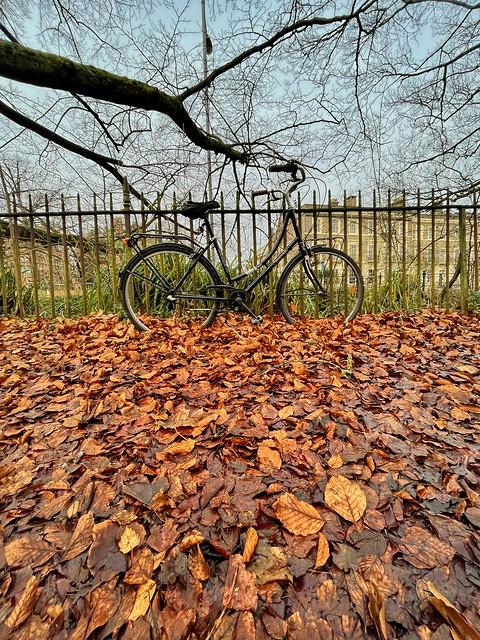 Cambridge 13 January