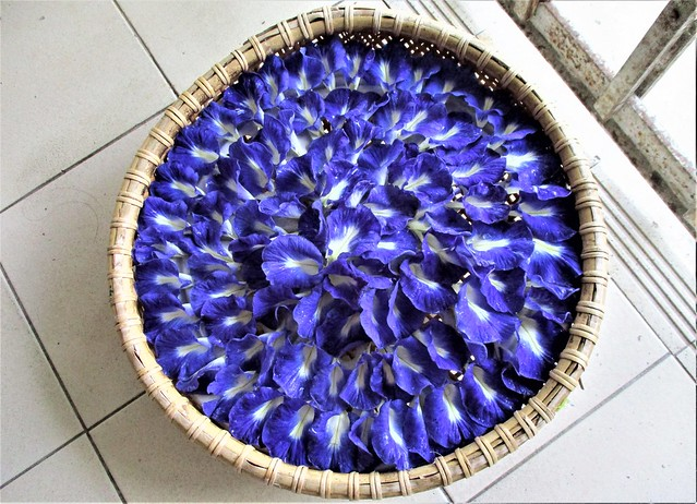 Butterfly pea flowers, ready for drying