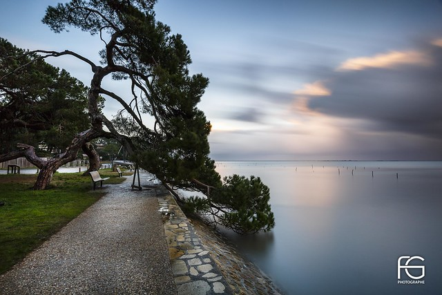 The old tree and the sea #explore