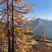 Cutthroat Pass larch