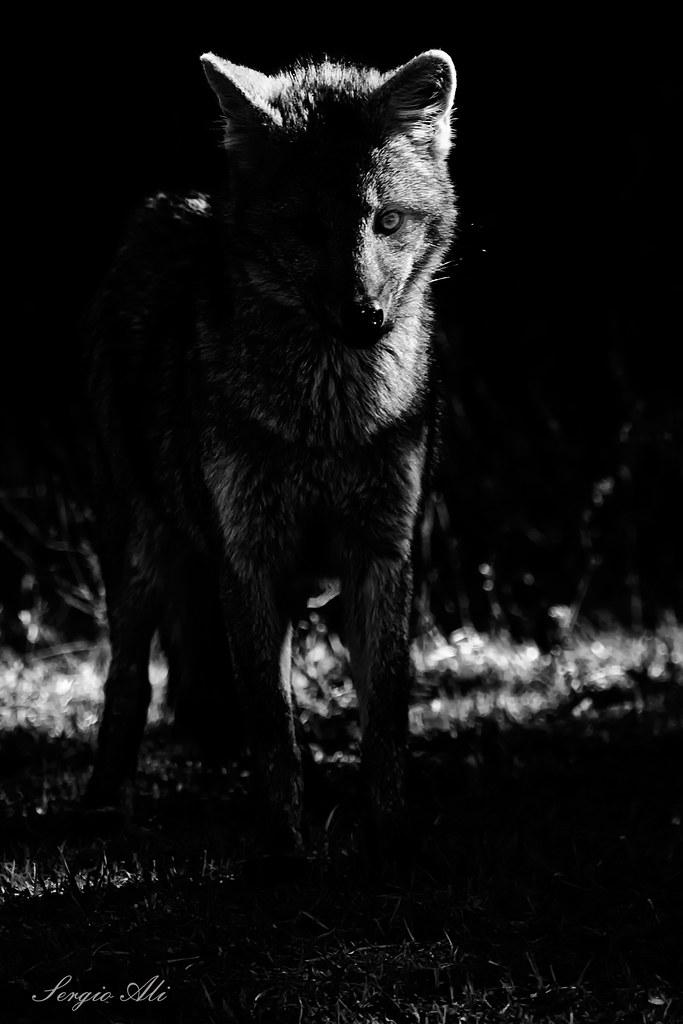 En las sombras...