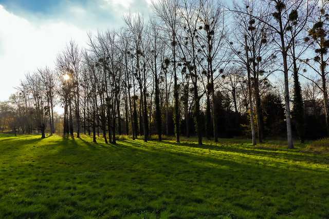 december sun / soleil de decembre