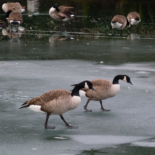 Goose-stepping, slippery surface