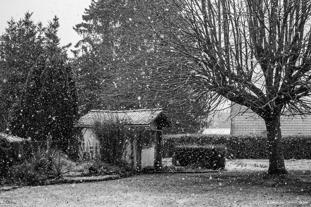 Mon jardin sous la neige 50834470102_f924b9a8ec_b