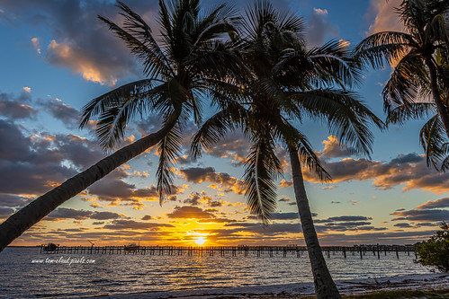 sun sunrise horizon clouds cloudy sky weather pier tree palms palmtree nature mothernature outdoors tropical tropics burst sunburst park sewallspointpark sewallspoint stuart martincounty florida usa seascape