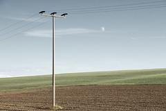 Fieldscape with Moon  (由  Bernd Walz