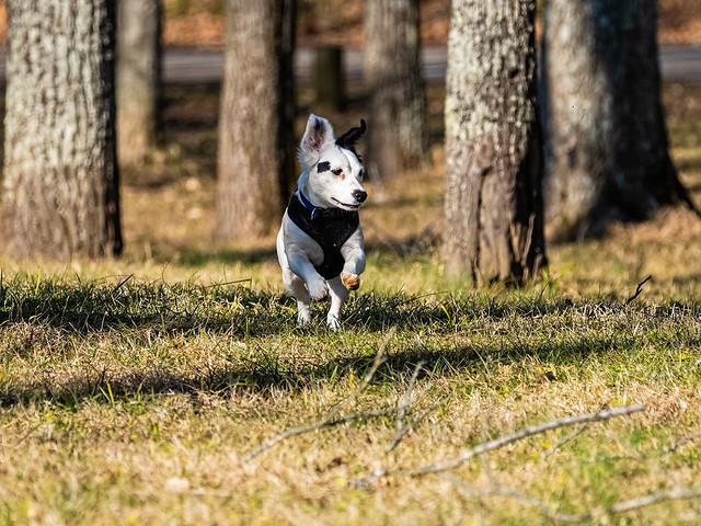 IMGPL21299_DxO_Fk - O'Bannon Woods State Park - See Spot Run
