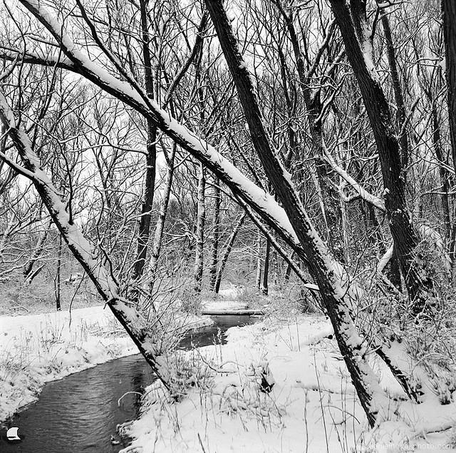 Through the Winter Landscape (YLM_0083)