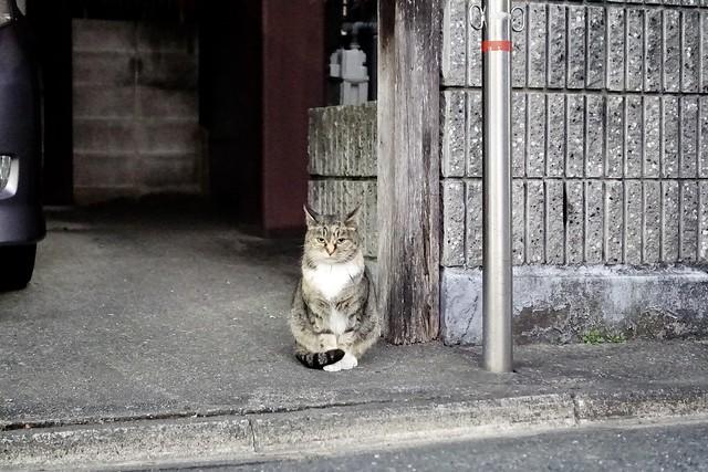 Today's Cat@2021−01−14