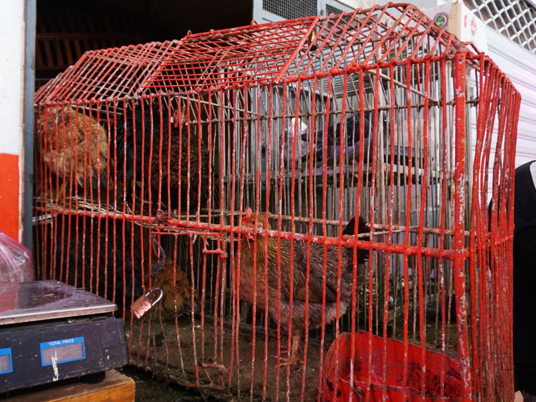 Meknes market chickens