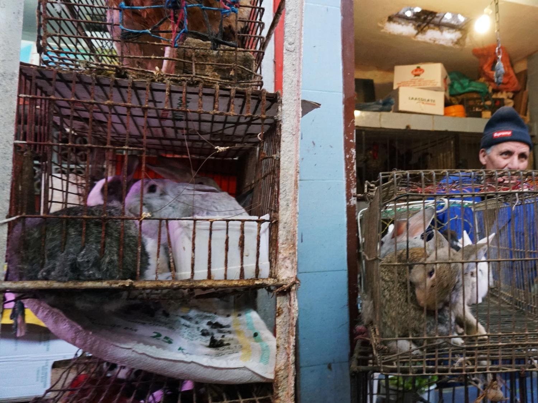 Meknes market rabbits