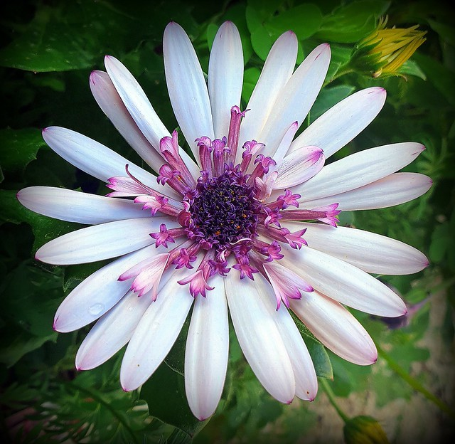 Flowers inside the flower