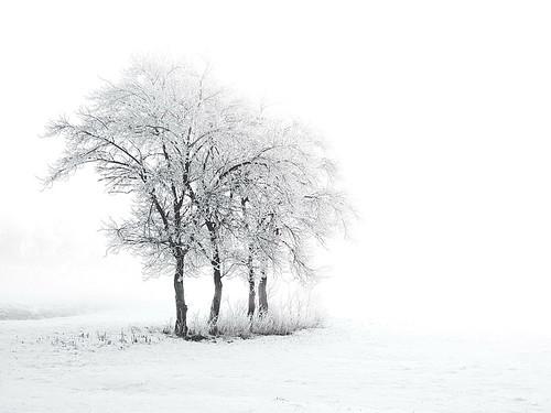 Winter im Elbtal