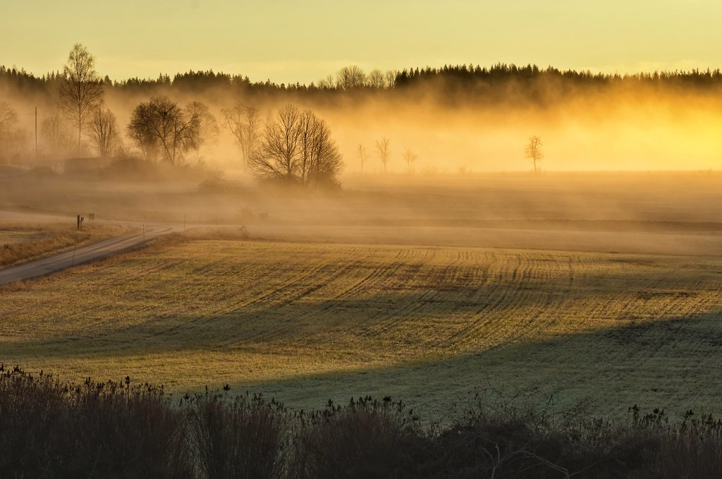 Countryside mist