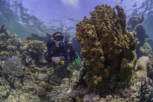 diver exploring the coral reef | by Mike Clark 100