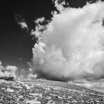 30. Juuli 2020 - 10:35 - Life in an alpine tundra ecosystem.