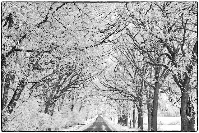 Walking Down The Frost Tunnel:  Rural Winter Road