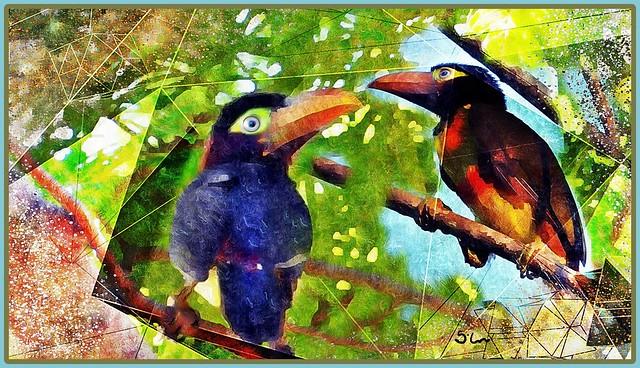 Small Toucans - explore