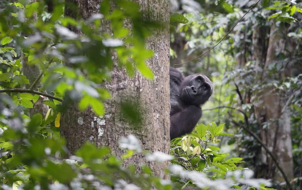 AI加入野生動物保衛戰:可辨識25種剛果雨林物種 助打擊走私