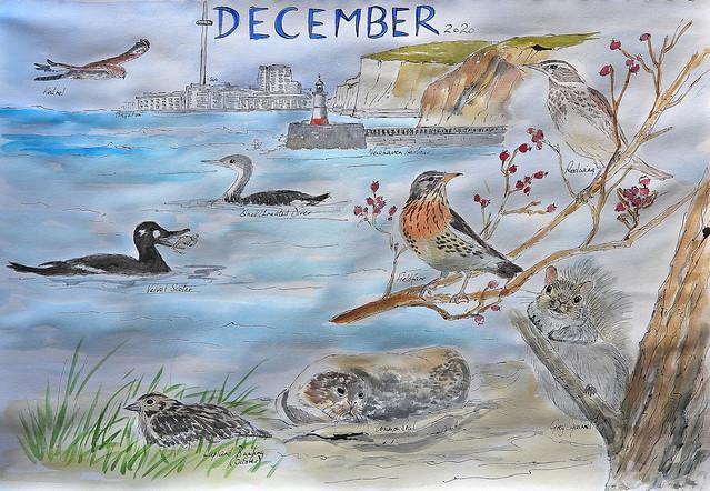 Wildlife Sketch, December 2020, P1 (1)
