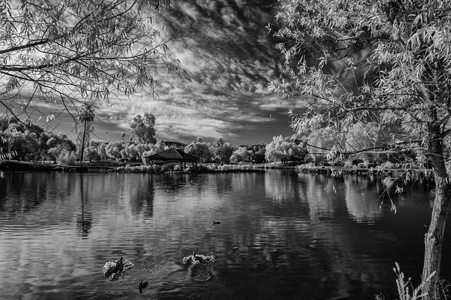 Birds, Clouds And Trees At Lindo Lake in IR