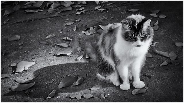 Cats (Gatos)
