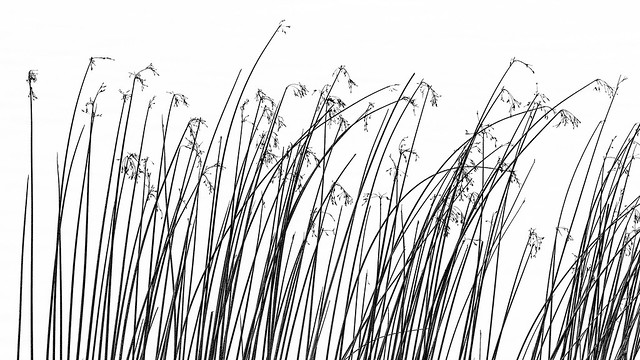 Sea Grass Pattern In B&W
