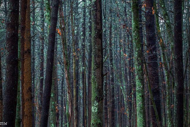 Thanksgiving Ground Forest