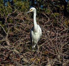 Mr. Egret