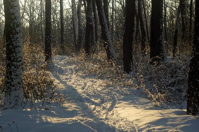 Зимними тропами / By winter paths