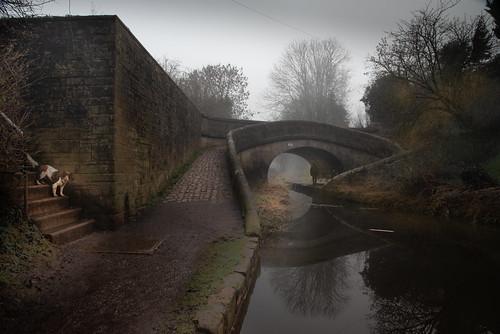 atmosphere fog mist dog congleton canal bridge processinggonehorrible moody meetmeonthecorner story