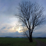 15. Jaanuar 2021 - 9:42 - Dans la lumière de janvier - Environs de Bresles - Oise