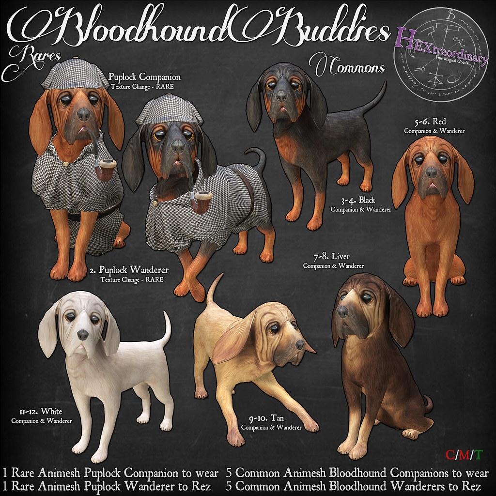 HEXtraordinary – Bloodhound Buddies @Epiphany