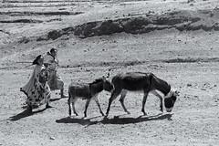 On the road of Ethiopia 2020: near Lalibela